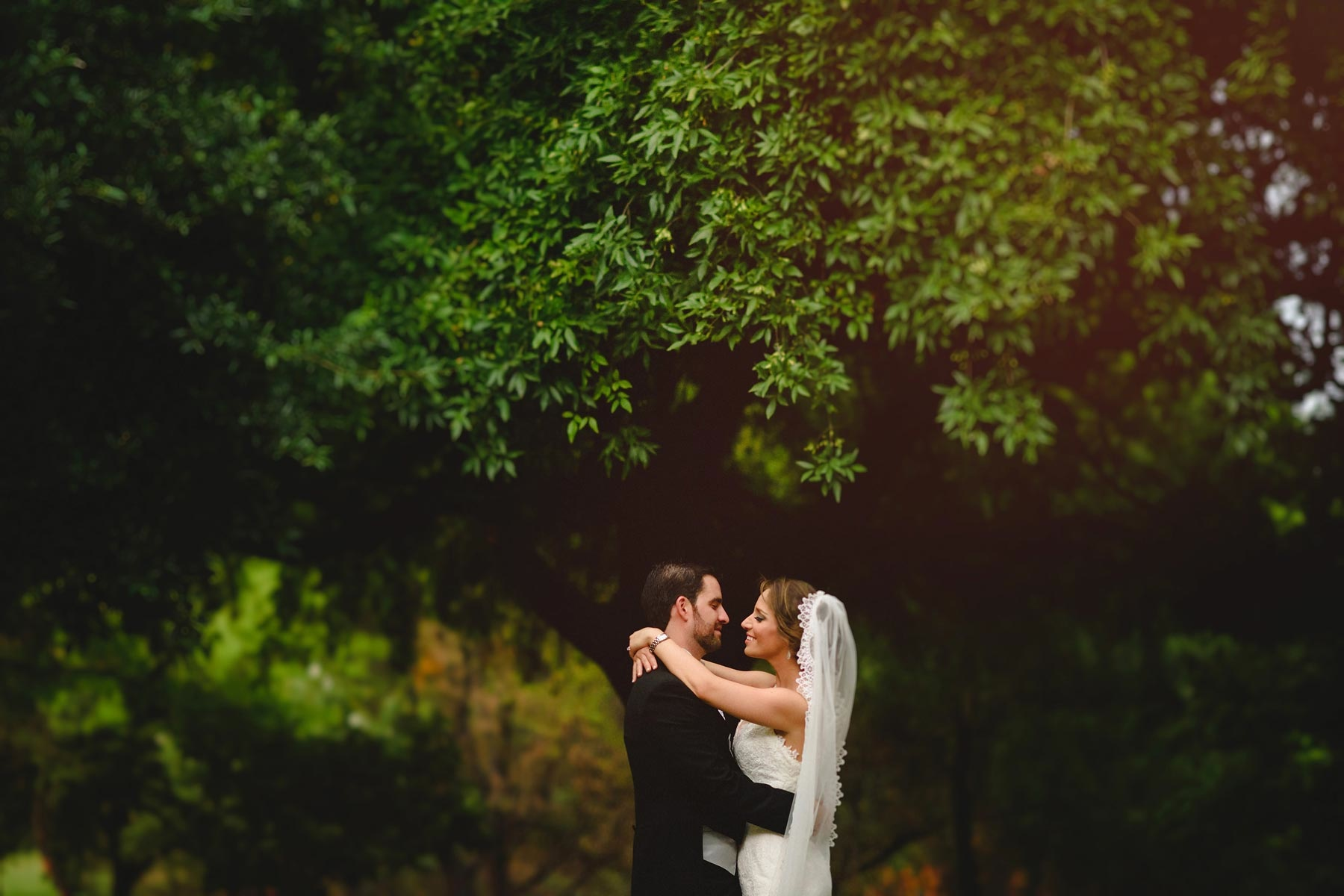 bride and groom in the tree